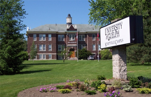 The Best Credit Cards for University of Guelph Students